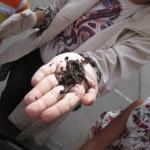 Regenwürmer als Bodenverbesserer